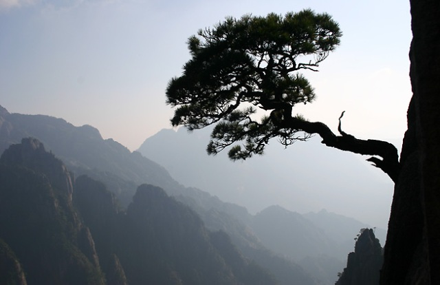tree-from-cliff